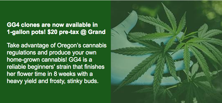 GG4 clones are available at BCC